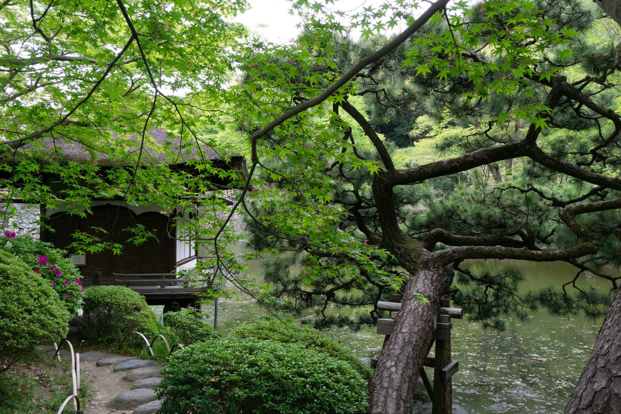 japan-residency-107